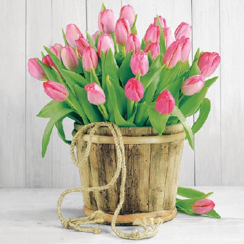 ambiente servietten tulips in bucket rosa farbige tulpen im holzeimer vor wei grauer. Black Bedroom Furniture Sets. Home Design Ideas
