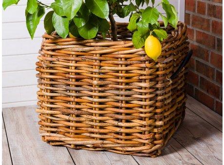 A2 Living Rattan Korb Mega Eckig Niedrig Version 50 cm hoch Pflanzkorb Übertopf 59x50 cm Dekoration für die Terrasse mit Zitronenbaum