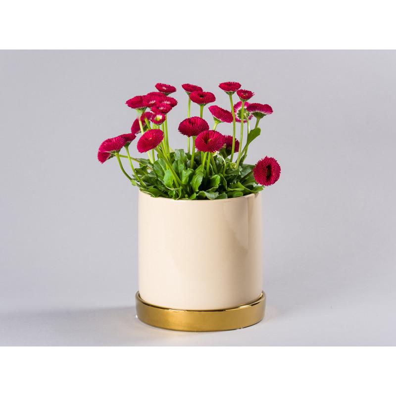 Bloomingville Blumentopf Natur Beige mit Untersetzer Gold schlicht Keramik Übertopf für Fensterbank mit Bellies Frühling
