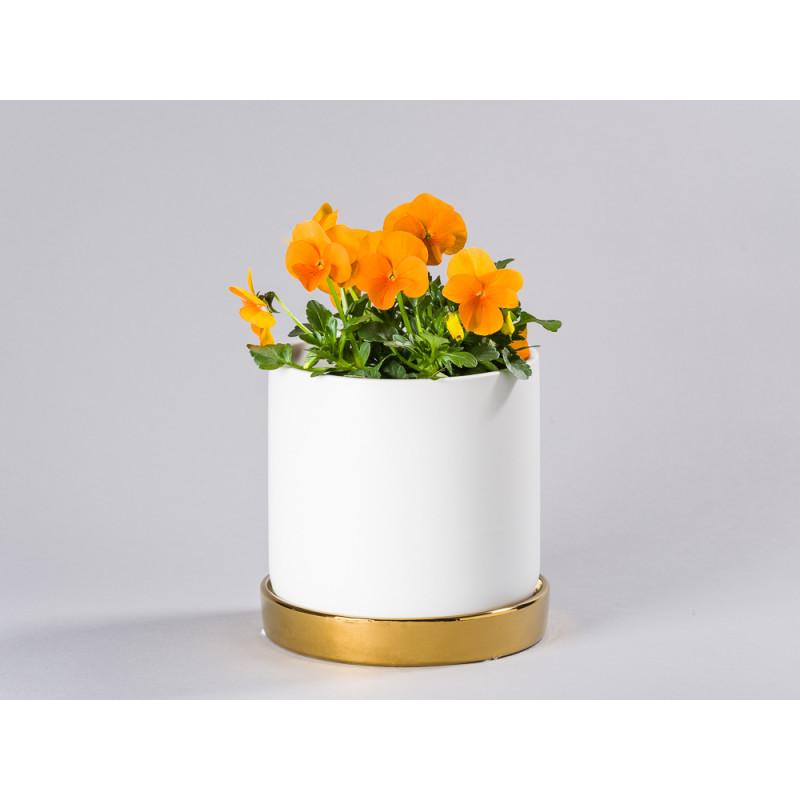 Bloomingville Blumentopf Weiß mit Untersetzer Gold schlicht Keramik Übertopf für Fensterbank mit Hornveilchen Frühling