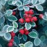 Ambiente Servietten Berries rote Beeren im Winter Frost Weihnachten