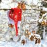 Ambiente Weihnachts Servietten Lost Cap rote Weihnachtsmann Mütze